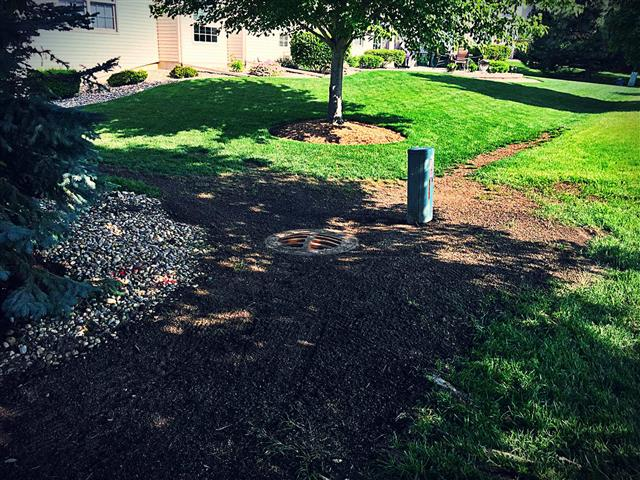 Grading around a sewer grate in a front lawn to improve drainage.