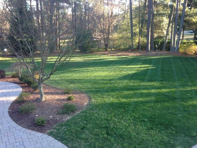 Striped up grass from a commercial lawn mower in a customer's backyard.